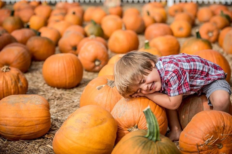 kid playing in boone hall pumpkin patch