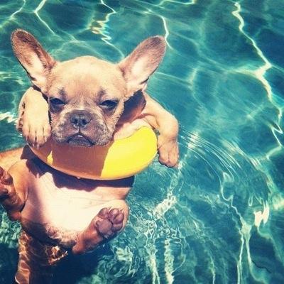 dog days of summer images