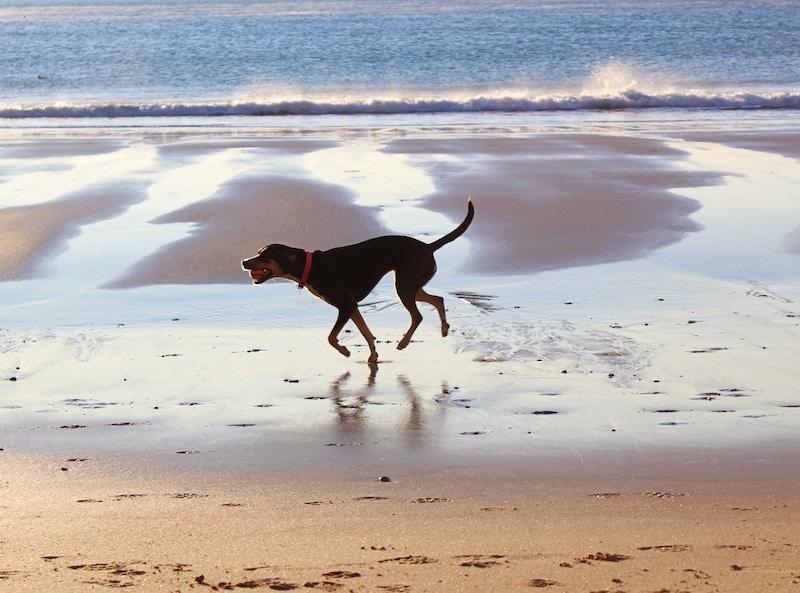 dog with ball on kiawah island beach